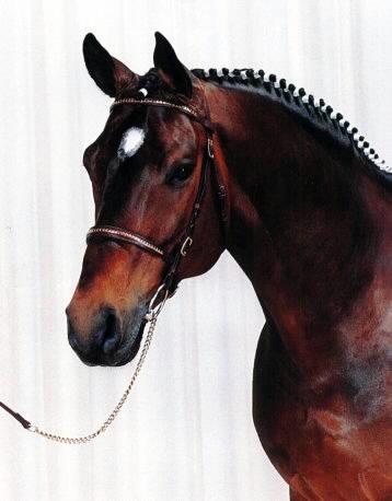 horse1774264.jpg